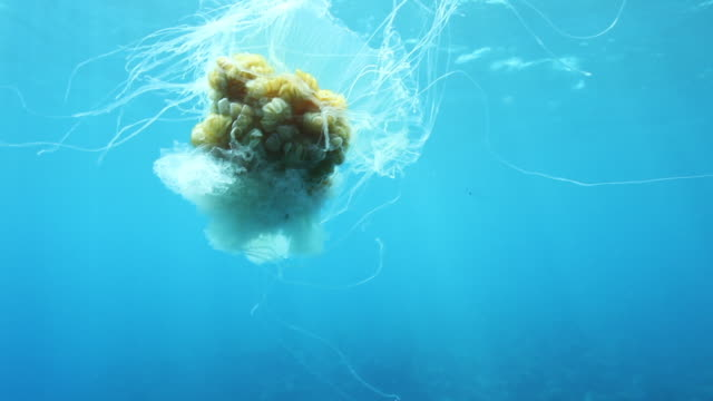 exotic jellyfish in bermuda, pov - tentacle stock videos & royalty-free footage