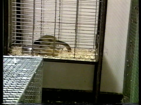 Exotic pets CF CMS Small monkey running around in cage PULL OUT CS Bat in cage CMS White small dog like animal CMS Two parrots CS Exotic bird in cage...