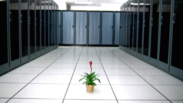 ws exotic potted plant in middle of server room - see other clips from this shoot 1480 stock videos and b-roll footage
