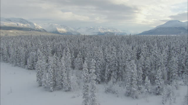 aerial expansive coniferous forest, wide plains, and looming mountains / alaska - アラスカ点の映像素材/bロール
