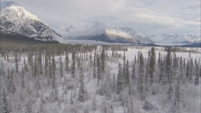 aerial expansive landscape of alaskan wilderness, with coniferous forest, wide plains, and looming mountains / alaska - アラスカ点の映像素材/bロール