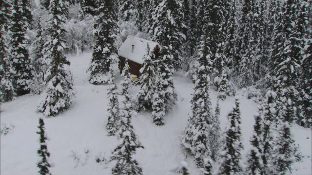 aerial expansive snow covered forest surrounding small, secluded wood cabin / alaska, united states - capanna di legno video stock e b–roll