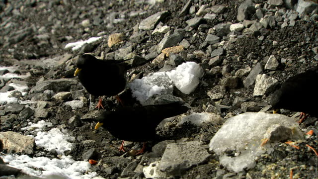 khumbu icefall / sherpa ceremony / base camp views / alpine chough birds; mount everest - seen from base camp/ good close shots of alpine chough... - feierliche veranstaltung stock-videos und b-roll-filmmaterial
