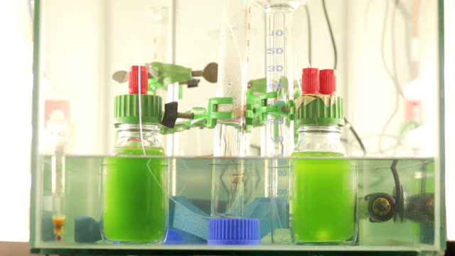 vidéos et rushes de expérimenter avec des algues sous atmosphère contrôlée - algues