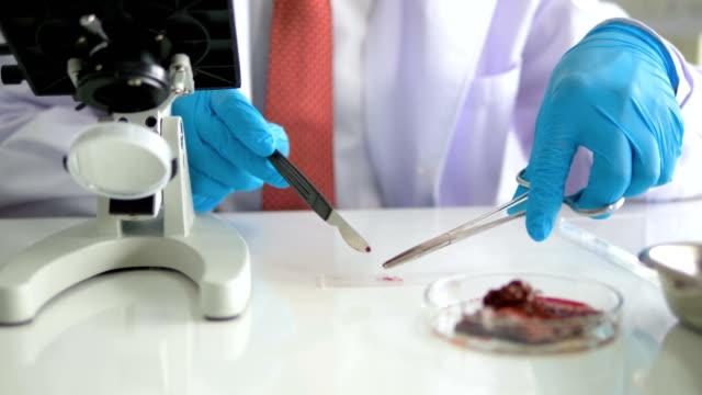 vídeos y material grabado en eventos de stock de criminólogo experto que trabaja en el laboratorio en busca de pruebas - crimen