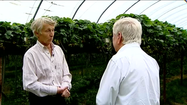 Experts meet at the Met Office to discuss causes of recent unusual weather ENGLAND Kent EXT Strawberries being picked at fruit farm Partially ripe...