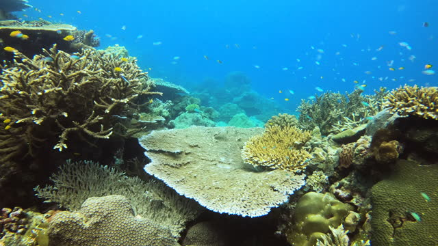 explore a beautiful landscape underwater world - hard coral stock videos & royalty-free footage