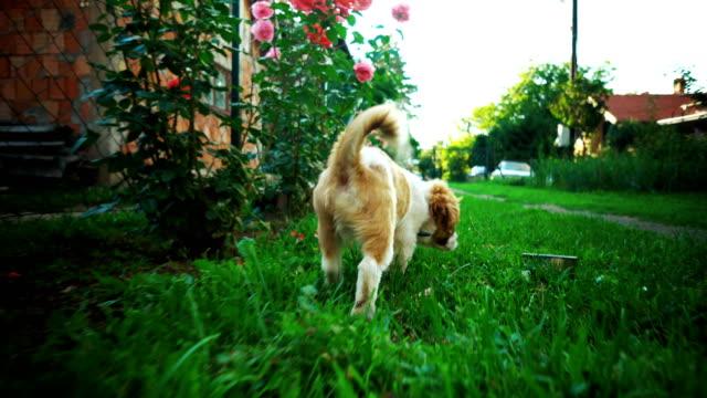 vidéos et rushes de explorer pour chien - chiot