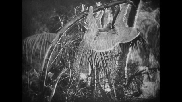 1925 explorers enjoy watching sloth mother and baby walking along branch - 1925 stock videos & royalty-free footage