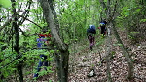 explorers hiking on a extreme terrain , climbing mountain in a forest - extreme terrain stock videos & royalty-free footage