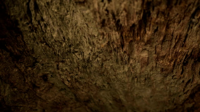 exploring cave - tree trunk stock videos & royalty-free footage