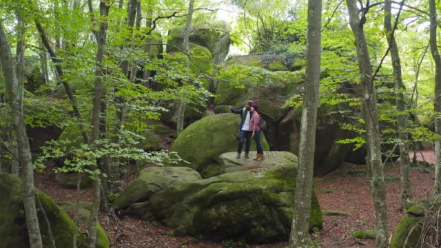 vídeos de stock, filmes e b-roll de explorar a floresta no outono - faia árvore de folha caduca