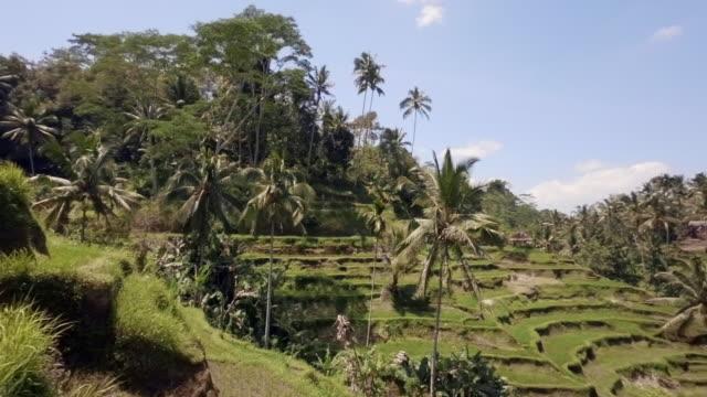 Reis-Plantagen in Tegalalang in der Nähe von Bali zu erkunden