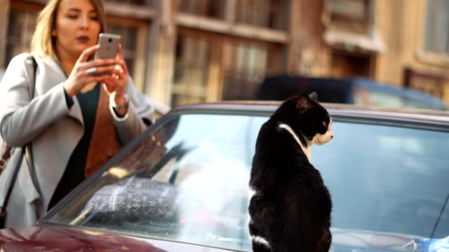 Exploring the city. Woman taking picture of a stray cat with a smart phone