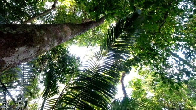 exploring the jungle - tree trunk stock videos & royalty-free footage