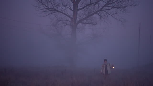 exploring the spooky and wild nature - mystery stock videos & royalty-free footage