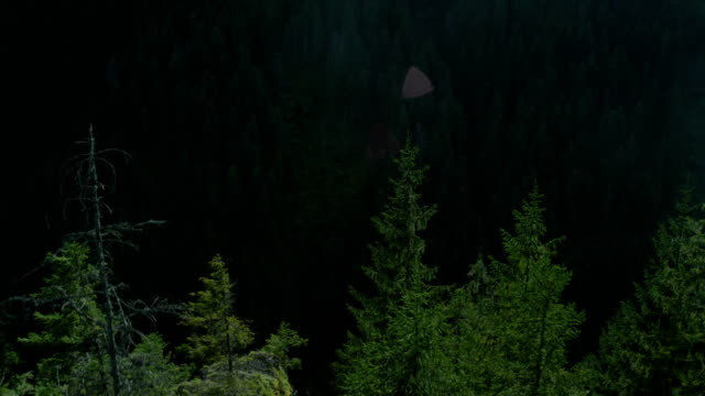 exploring wilderness. hills covered with spruce forest - spruce stock videos & royalty-free footage