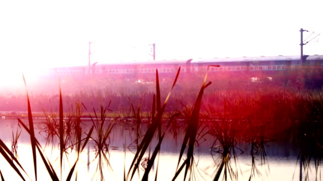 express train passing through forest during sunrise near lake - pond stock videos & royalty-free footage