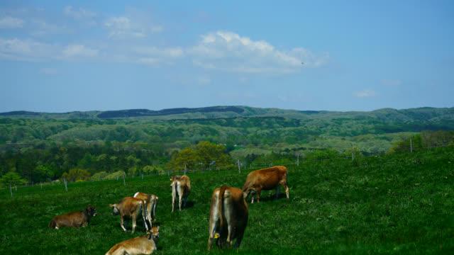 拡張ファームの土地と乳牛飼養緑の草 - 乳製品工場点の映像素材/bロール
