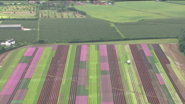 Exterior aerial shots of farm fields and pickers at work picking cabbages on 21 July 2017 in Sussex United Kingdom