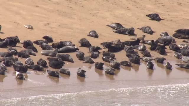 vídeos de stock e filmes b-roll de exterior aerial shots of large numbers of seals on a sandbar off the kent coastline on 8 june 2018 in kent united kingdom - banco de areia