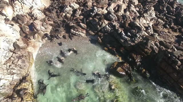 exterior aerial shots of sharks at sea off a research vessel and seals on rocks on july 20 2016 in cape town south africa - seals stock videos and b-roll footage
