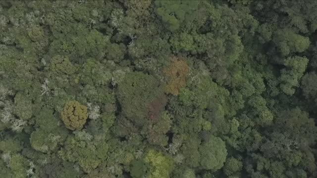 exterior drone aerial footage over an area of dense jungle outside bukavu on 4 april 2018 in bukavu democratic republic of congo - 南キブ点の映像素材/bロール