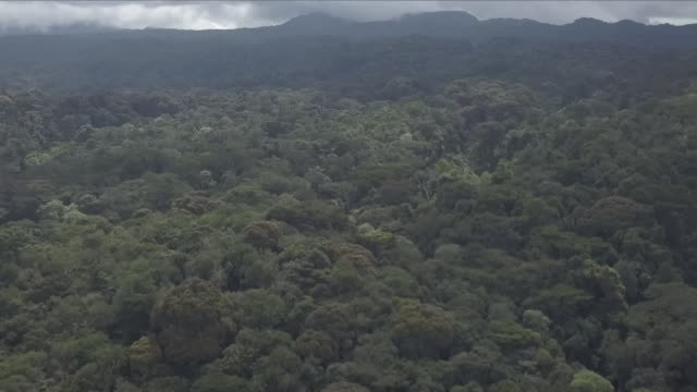 exterior drone aerial footage over an area of dense jungle outside bukavu on 4 april 2018 in bukavu, democratic republic of congo - democratic republic of the congo stock videos & royalty-free footage