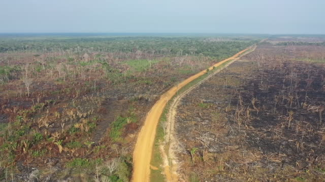 vídeos de stock e filmes b-roll de exterior drone aerial shots of a decimated area of amazonian rainforest and the trans amazonian highway after forest fires on 27 september 2019 in... - fire natural phenomenon