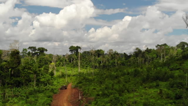 exterior drone aerial shots of a deforested area of the amazon rainforest with cleared shrubland and dead trees on 7 august 2019 in brazil - shrubland stock videos & royalty-free footage