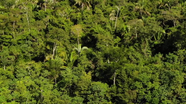 exterior drone aerial shots of a deforested area of the amazon rainforest with cleared shrubland and dead trees and a river on 7 august 2019 in brazil - shrubland stock videos & royalty-free footage
