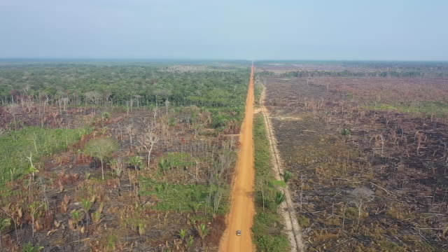 exterior drone shot of burnt down amazon rainforest on 27th august 2019 in brazil - forest stock videos & royalty-free footage