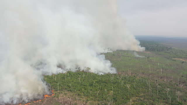 exterior drone shot of the amazon rainforest fires on 25th september 2019 in acre state, brazil - forest stock videos & royalty-free footage