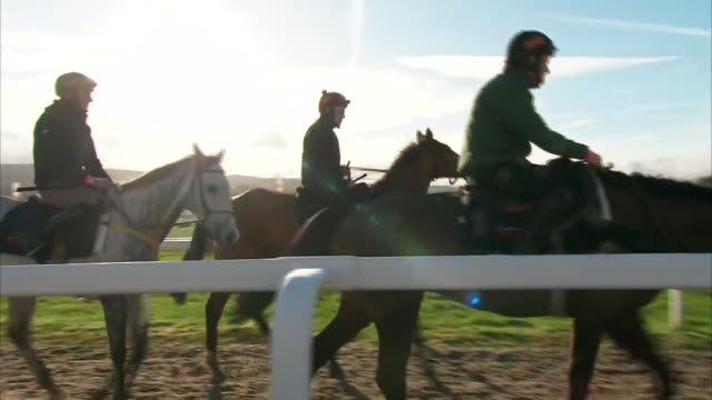 exterior footage of racehorses walking on cheltenham racecourse at the cheltenham festival on 11th march 2020 in cheltenham, united kingdom - cheltenham stock videos & royalty-free footage
