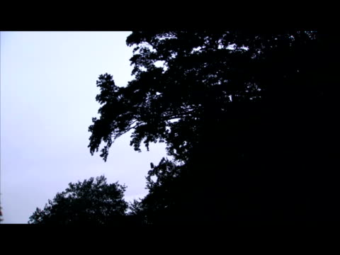 vidéos et rushes de exterior night shots of police helicopter above rothbury woodland as police continue their search for killer raoul moat police helicopter searches... - nord est de l'angleterre