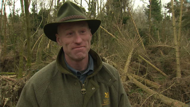 exterior shot interview andrew wright, national trust employee talks about the damage to the forest & why it is so significant. on march 07, 2014 in... - national trust video stock e b–roll