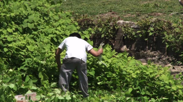 exterior shot of an immigrant worker laboring in the heat cutting away growth with a machete / work is happening on the outskirts of a shopping... - illegaler einwanderer stock-videos und b-roll-filmmaterial