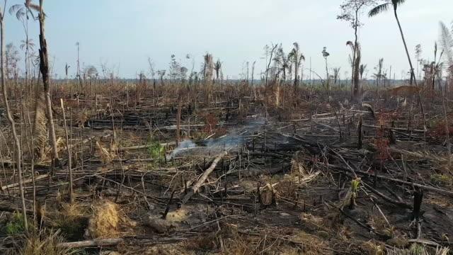 vídeos y material grabado en eventos de stock de exterior shot of burnt down amazon rainforest on 27th august 2019 in brazil - región del amazonas