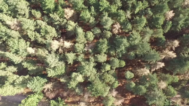 exterior shots drone aerials of forest trees woodland on february 18 2016 in unspecified united kingdom - woodland stock videos & royalty-free footage