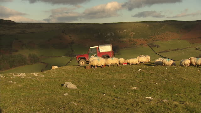 Exterior shots farmer calling out to sheep distributing foodLlanfairfechan is a town and community in the Conwy County Borough Wales It lies on the...