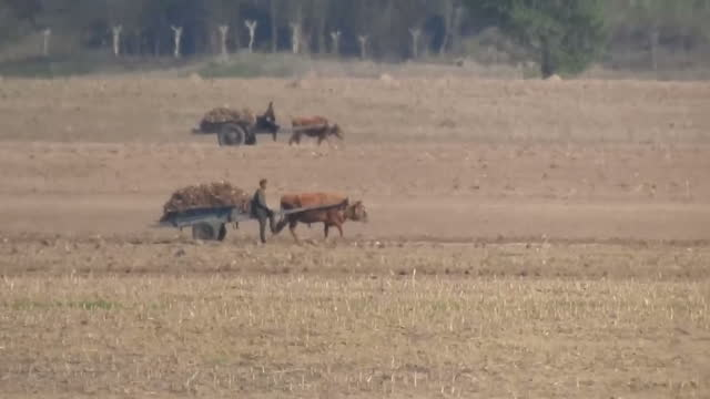 exterior shots farmers working in fields animals dragging karts through fields with military walking around in dandong china on thursday 4th may 2017 - working animals stock videos & royalty-free footage
