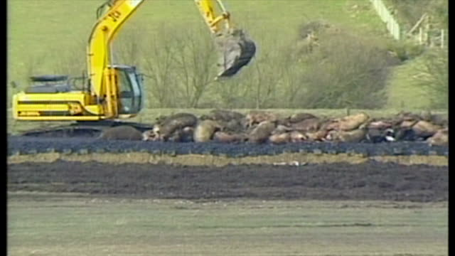 exterior shots field with dead animals piled up tractor with trailer jcb digger pilling up carcases - anno 2001 video stock e b–roll