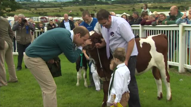 stockvideo's en b-roll-footage met exterior shots hrh prince william duke of cambridge is shown around an enclosure containing cows and bulls his visit to the anglesey show is... - omsloten ruimte