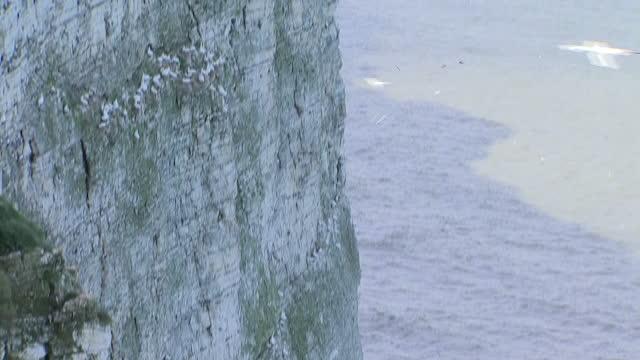 exterior shots kittiwakes nesting on cliff side below, on 11 april 2017 in bempton, united kingdom - ベンプトン点の映像素材/bロール