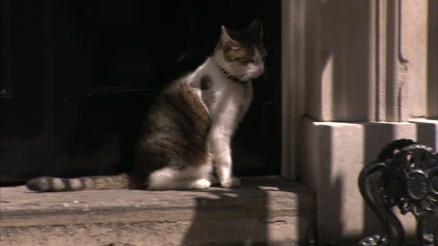 Exterior shots Larry the cat Chief Mouser to the Cabinet Office wandering around outside 10 Downing Street sits on doorstep and is let into Downing...