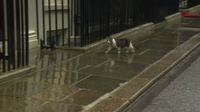 exterior shots larry the cat downing street chief mouser to the cabinet office wandering around outside 10 downing street after arrival of president... - david cameron politiker stock-videos und b-roll-filmmaterial