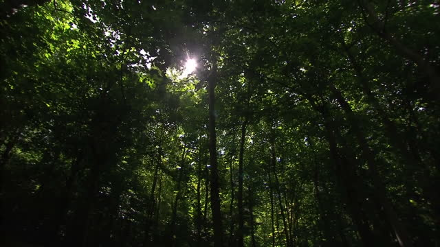 stockvideo's en b-roll-footage met exterior shots leaves trees green forest woodland on may 05 2016 in salisbury england - wiltshire