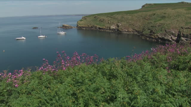exterior shots of a bay a welcome to skomer island sign, a puffin n the water, and a boat full of visitors, tourists, nature lovers arriving on... - ペンブローク点の映像素材/bロール