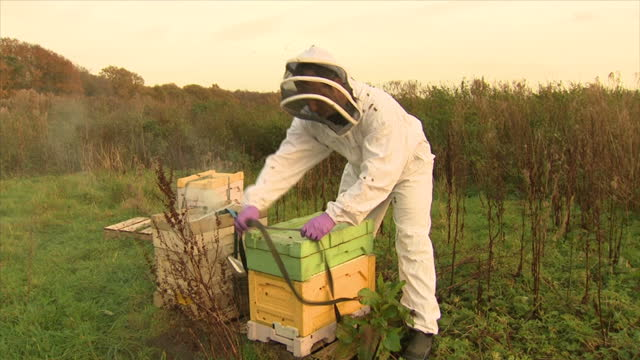 exterior shots of a beekeeper checking beehives, including a close-up shot of honey bees crawling on hive frames and the beekeeper putting together... - 英チェシャー州点の映像素材/bロール