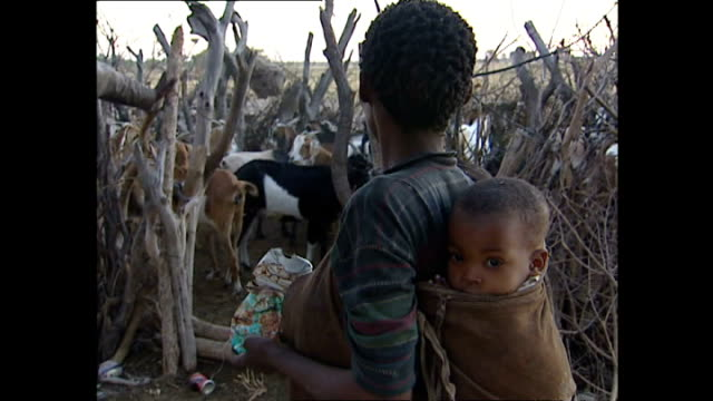 Exterior shots of a bush village mother carrying a baby on her back whilst herding goats into a makeshift pen on a bush village in the Kalahari on...
